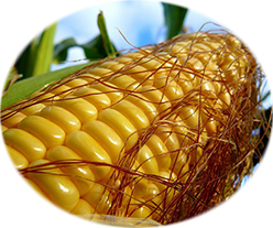Как и сколько варить кукурузу